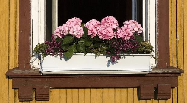 Kompozycje kwiatowe z hortensji w donicy. Jak stworzyć piękne kwiatowe kompozycje w skrzynkach?