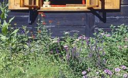 Rośliny przy domu letnim: łąka kwietna czy wiejski ogródek?