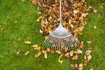 Jesień w ogrodzie: usuwanie liści, czyszczenie oczka wodnego i nawierzchni