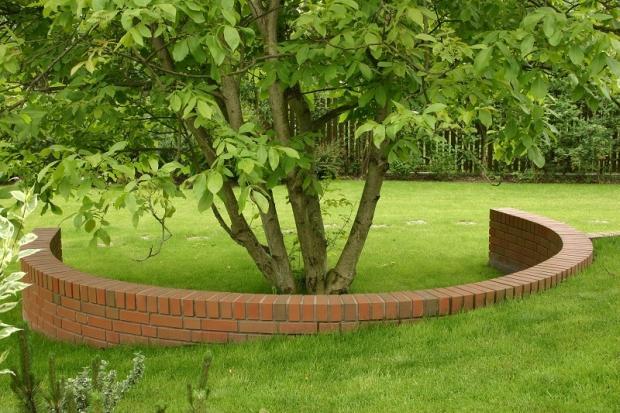Nawożenie drzew