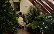 Jakie rośliny posadzić w ogrodzie zimowym?